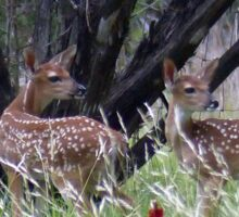 The Twins Fawns Sticker