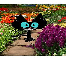 Black Cat At A Garden Photographic Print