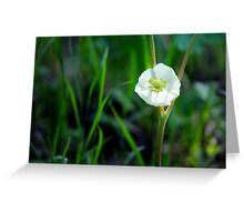 Mayapple Blossom Greeting Card