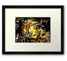 """ON THE REEF: """"Gold"""" Framed Print"""