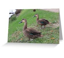 Birds of the Bay Greeting Card