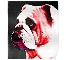 Southern Dawg By Sharon Cummings Poster