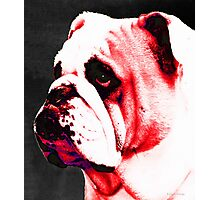 Southern Dawg By Sharon Cummings Photographic Print