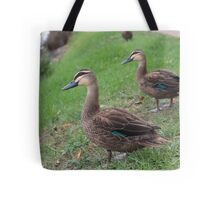 Birds of the Bay Tote Bag