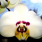 THE BEAUTY OF THE ORCHID by JoAnnHayden