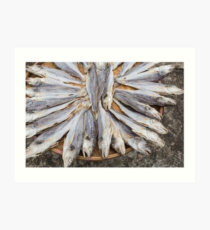 Dried fish Art Print