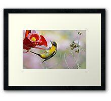 Agile Oriole Framed Print