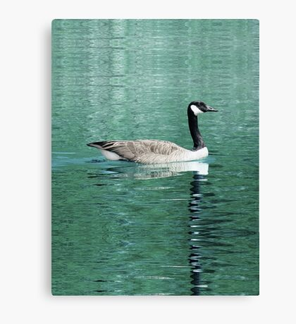 Canada Goose On Shimmering, Shimmering Water Canvas Print