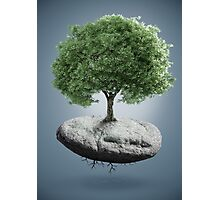 Tree on suspended rock Photographic Print