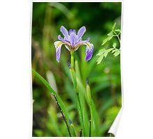 Lakeside Bloom Poster