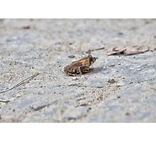 Treman Frog Photographic Print