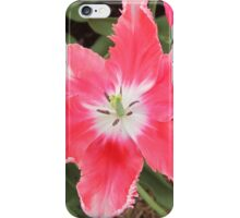 Open Pink Tulips iPhone Case/Skin