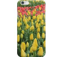 Tulip Time at Bowral iPhone Case/Skin