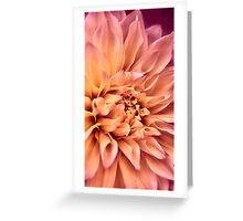 Dahlia in Bloom Greeting Card