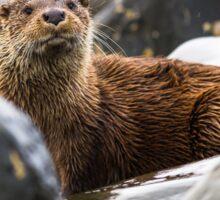 Arran Otter Sticker