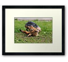 Cats vs Dog Framed Print