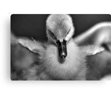 I Wish I Could Fly (black and white version) Canvas Print