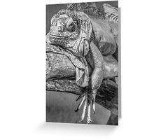 Lizard in black and white Greeting Card