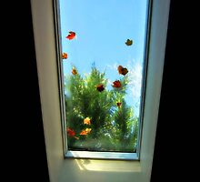 Skylight through the Change of Seasons by Bine