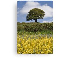 TREE ON A GOLDEN HILL Canvas Print