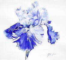 Rex's Blue Iris by Ruth S Harris