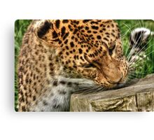 North Chinese Leopard Canvas Print
