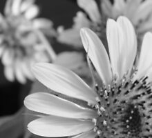 my best sunflower by Marie Tixier-Brennan