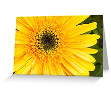 Vibrant Blooms in Yellow 3 Greeting Card