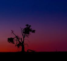 Broken Tree at Sundown by Penny Kittel