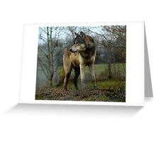 Grey Wolf Standing Greeting Card