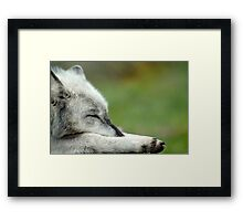 Sleeping Grey Wolf Framed Print