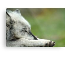 Sleeping Grey Wolf Metal Print