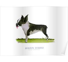 Boston Terrier, tony fernandes Poster