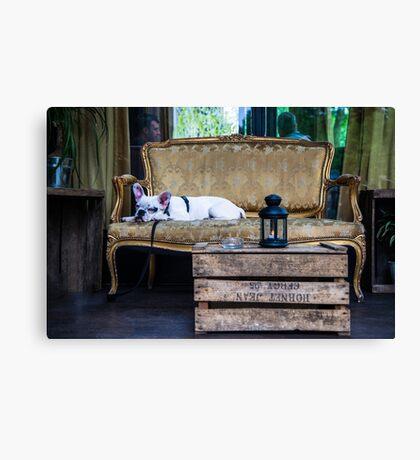 French bulldog siesta in Paris Canvas Print