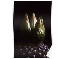 Cactus Flower Buds Poster