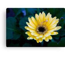 Vibrant Blooms in Yellow Canvas Print