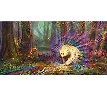 Spirit Bear Photographic Print