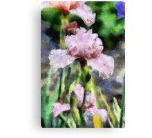Pink Iris Painting Canvas Print