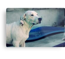 for the love of dogs. Metal Print