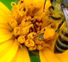 Honey Bee Good Sticker