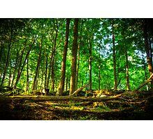Dundas Valley Fallen Trees Photographic Print