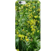 A Riot of Daffodils and Tulips - Keukenhof Gardens iPhone Case/Skin