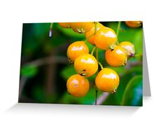 Golden Dew Drop in Contrast Greeting Card