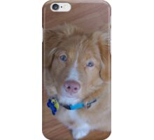 Toller Stare iPhone Case/Skin