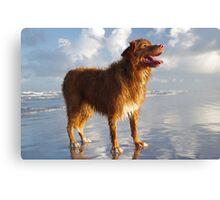 Happy Beach Toller Canvas Print