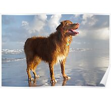 Happy Beach Toller Poster