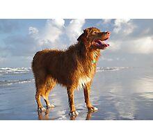 Happy Beach Toller Photographic Print