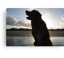 Toller Silhouette Canvas Print