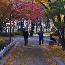 A Walk in the Park in Seoul by Christian Eccleston