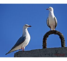 Seagull in Wollongong (5) Photographic Print